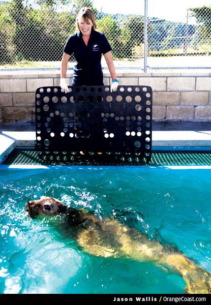 Marine Mammal Rescuer