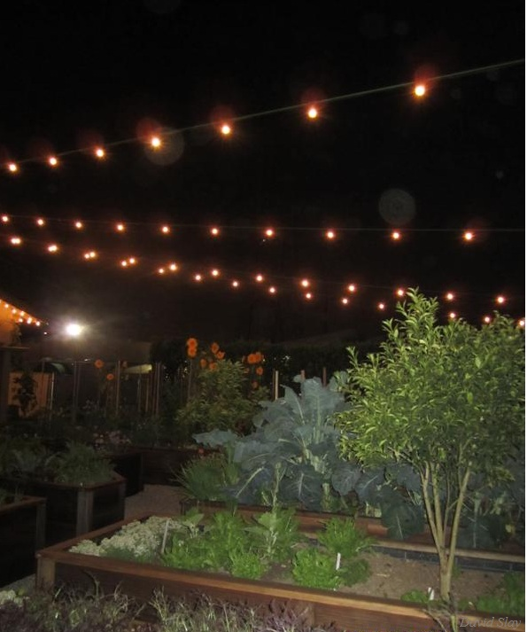 In the Garden @ Park Ave—fertile ground for great food