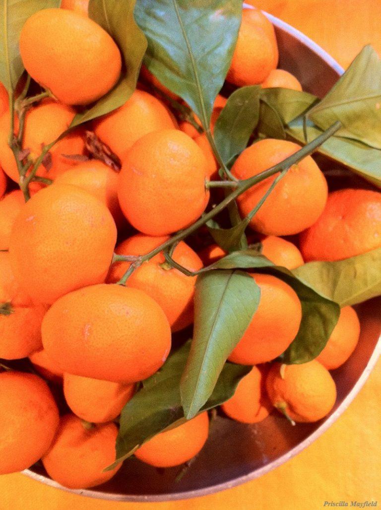 Garden Special: Satsuma Mandarins