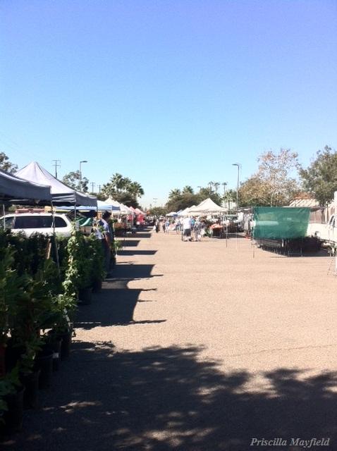 Where's My O.C. Farmers Market: Wednesday Edition