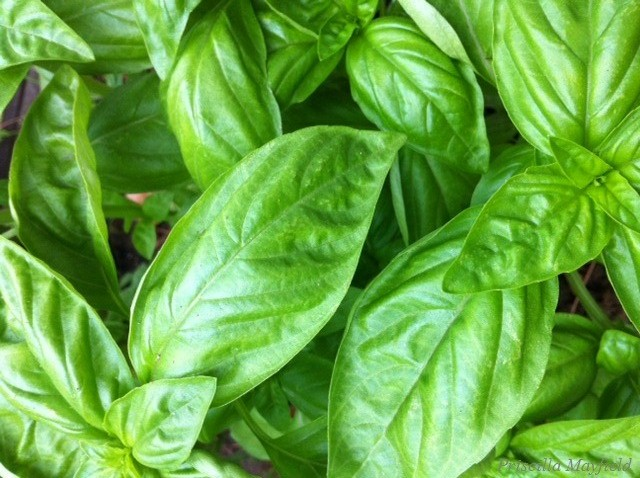 No Such Thing as Too Much Basil―Though My Pesto's Had a Change of Nut