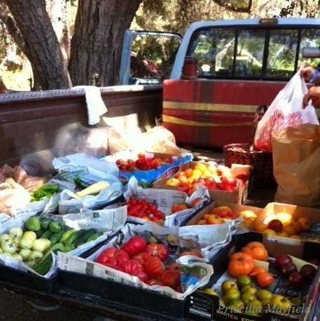 Anything New in Late-Summer Produce Provisioning?