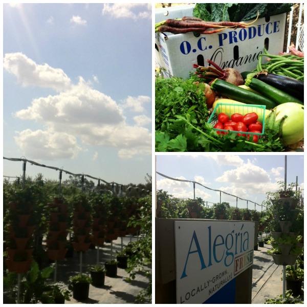 Alegria Fresh + OC Produce = A (Really) Great Park