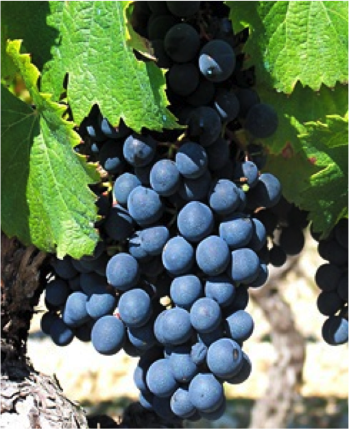 What's in a Name: Malbec