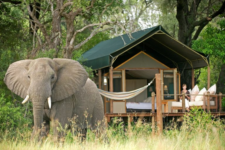 Searching for Sanctuary: Walking with the Elephants