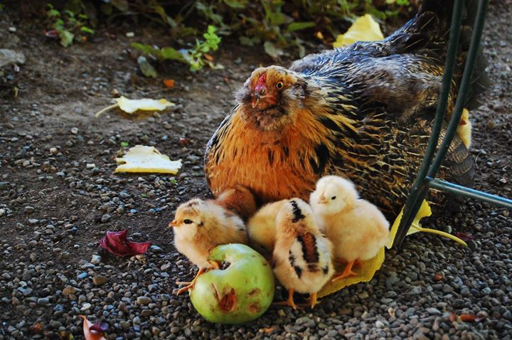 Autumn at The Apple Farm in Philo, California