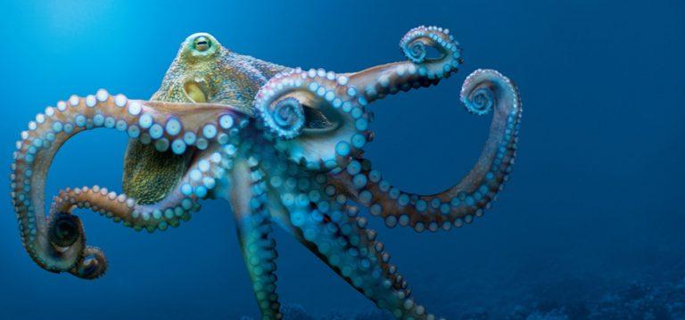 "The Traveling Nerd: ""Tentacles,"" Monterey Bay Aquarium"