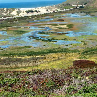 Pescadero Marsh Preserve