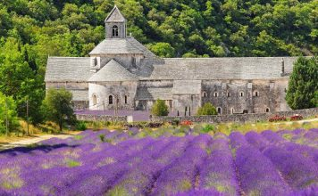 Provence - Blooming Lavender Field