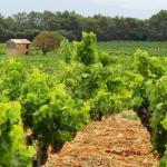 Provence - Chateauneuf-du-Pape-Vineyards
