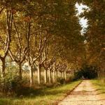 St.-Remy-de-Provence-Road