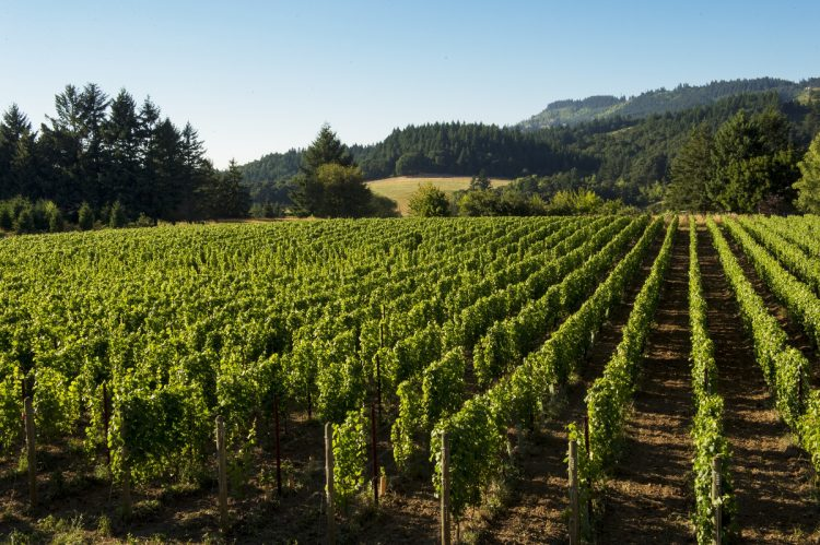 More to Try and Love in Oregon's Willamette Valley Than Pinot Noir