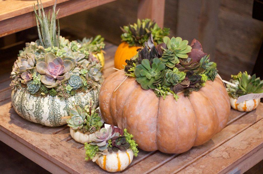Rogers Gardens pumpkin
