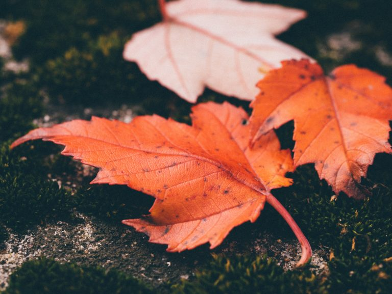 Where to See Fall Foliage in Orange County
