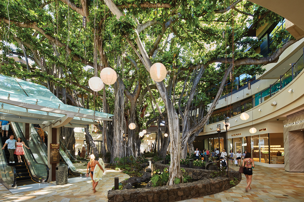 4cf50f41e32 The legendary banyan tree at International Market Place remains a focal  point.