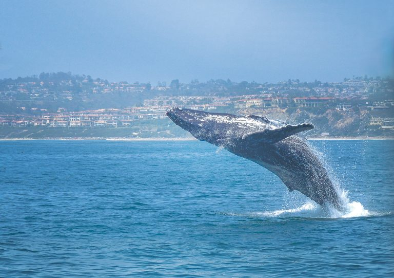 Why We Love O.C. | Natural Marvels in Dana Point and Laguna Hills