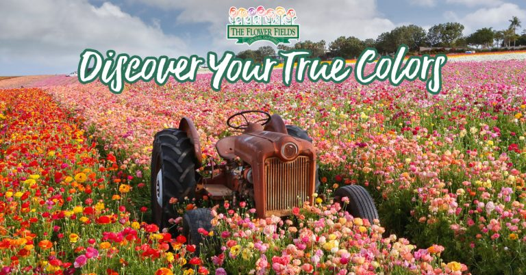 In Bloom: The Flower Fields at Carlsbad Ranch®
