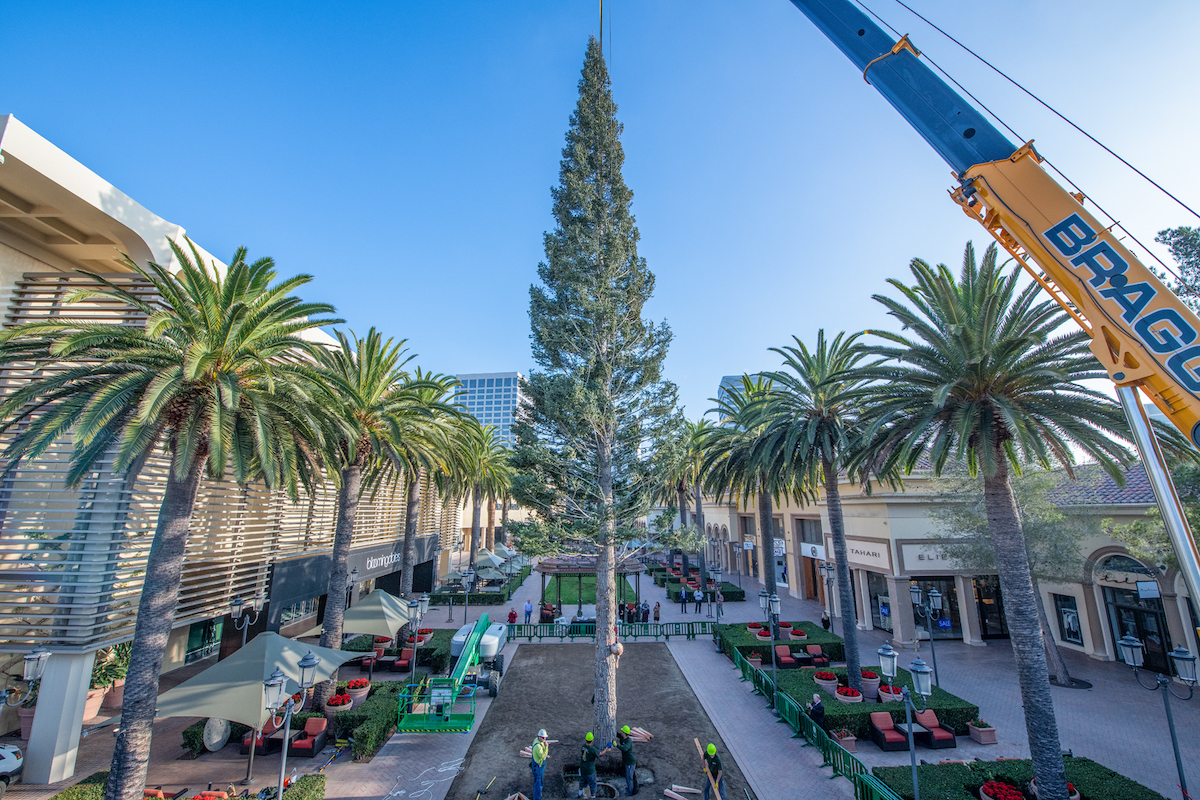 30 Years of Erecting the Holiday Tree at Fashion Island