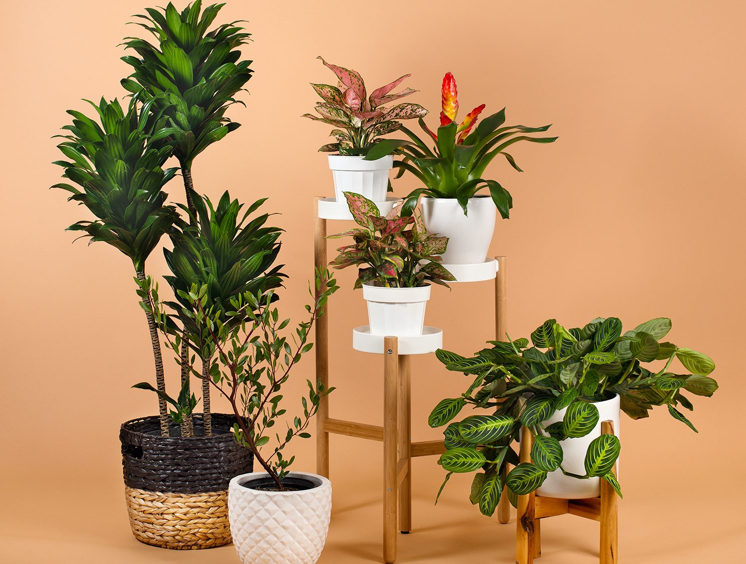 Unique Plants From Local Nurseries