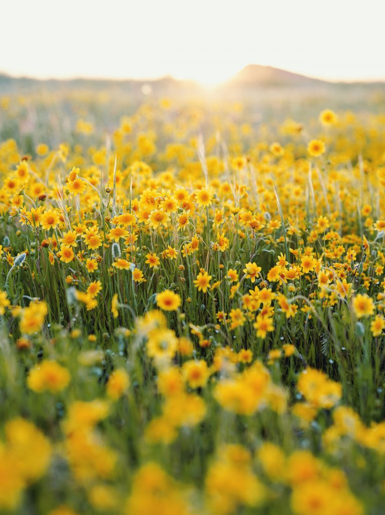 Irvine Ranch Conservancy Shares 4 Easy Ways To Keep Habitats Thriving