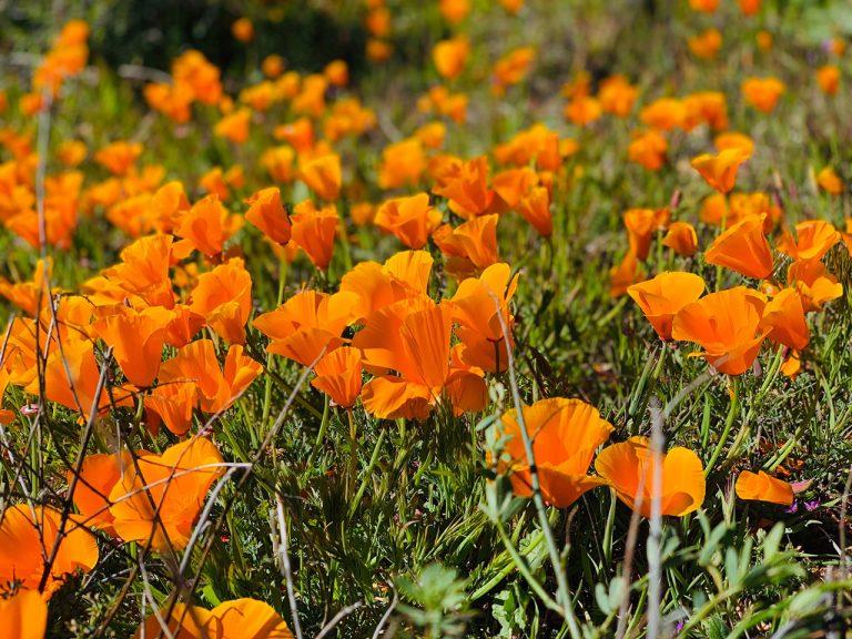 5 Great Wildflower Hikes In Orange County
