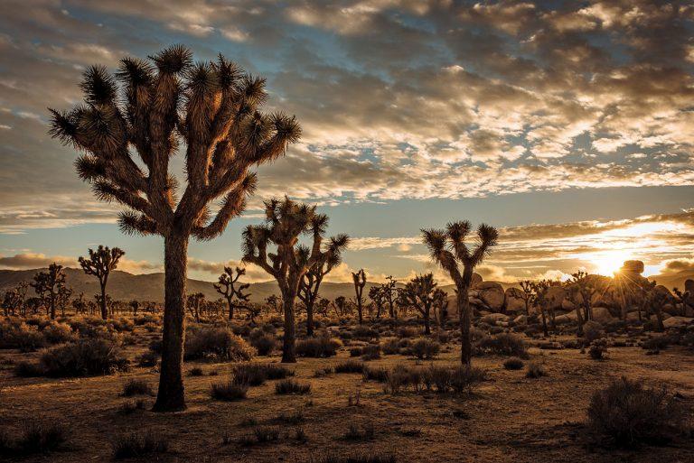 National Parks Near Orange County: Joshua Tree