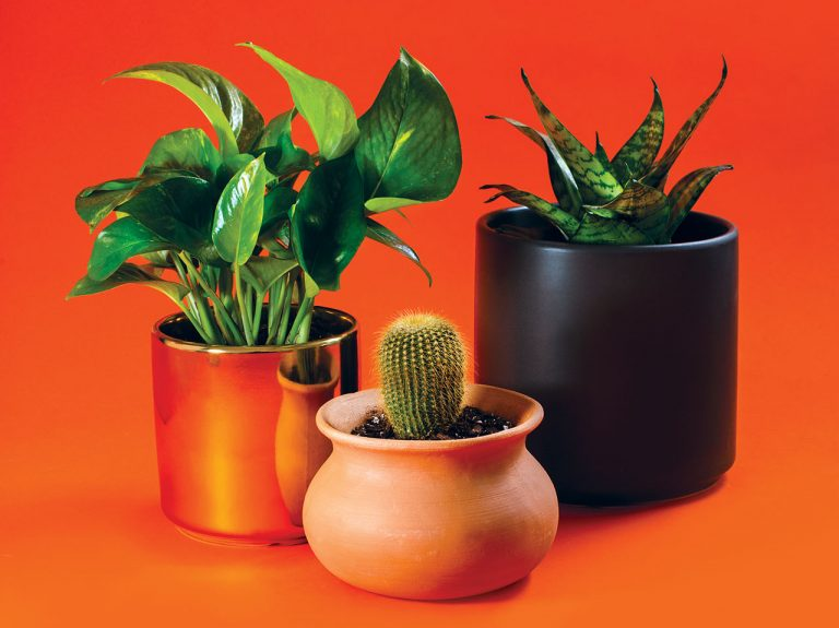 Pots and Plants From Huntington Beach's Palm and Ninth